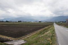Ein Erntefeld in Japan Lizenzfreie Stockfotos