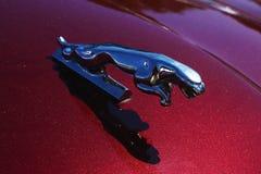 Ein erstaunliches Metallspringender Jaguar auf dem Burgunder-Hintergrund stockfoto