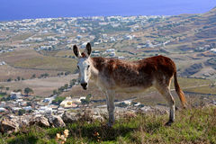 Ein Esel steht auf einem Abhang Stockfoto