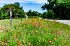 Ein Esel in Texas Field von Wildflowers Stockfotografie