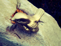 Ein ewiger Vogel Lizenzfreie Stockfotografie