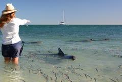 Ein Förster und die Delphine Affe Mia Haifisch-Bucht Sein gelegen auf Wellington-Straße und war im November 2012 geöffnet Lizenzfreies Stockfoto