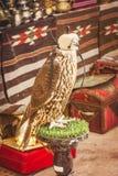 Ein Falke, der seine Haube in Dubai, Arabische Emirate trägt lizenzfreie stockfotos