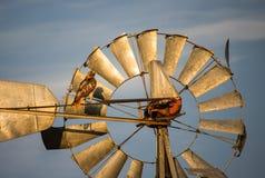 Ein Falke hockt auf einer alten Windmühle an einem sonnenbeschienen Abend Lizenzfreie Stockfotografie