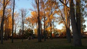 Ein Fall-Morgen im Park Lizenzfreie Stockfotos
