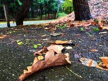 Ein Fallen verlässt auf dem Seitenweg Lizenzfreie Stockbilder