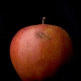 Ein falscher Apple Lizenzfreies Stockbild
