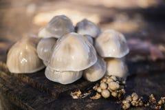 Ein famili des Pilzes Stockfoto
