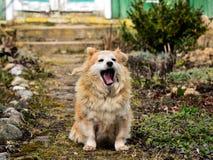 Ein Fan und ein netter Hund nach dem Abendessen im Dorf Lizenzfreie Stockfotos