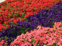 Ein Farbenblumenbett Stockbild