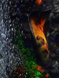 Ein farbiges Aquarium schwimmt nahe den Steinen und Algen und unten schwimmt Lizenzfreie Stockbilder
