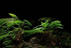 Ein Farn in einem Wald stockbilder
