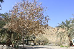Ein Fashkha, Einot Tzukim自然储备绿洲在圣地 免版税图库摄影
