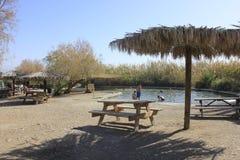 Ein Fashkha, Einot Tzukim自然储备绿洲在圣地 免版税库存图片