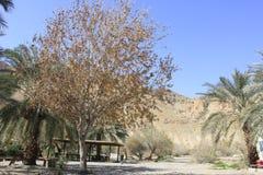 Ein Fashkha, oas Einot Tzukim för naturlig reserv i det heliga landet Royaltyfri Fotografi