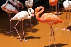 Ein fast perfektes Flamingo-Herz Stockfotos