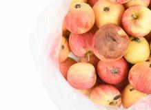 Ein fauler Apfel ist in der Tasche eingeschlossen stockfotografie