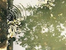 Ein feiner Kanal und eine Reflexion in einem allgemeinen Park in Bucha, Ukraine Lizenzfreies Stockbild