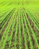 Ein Feld Stockfoto