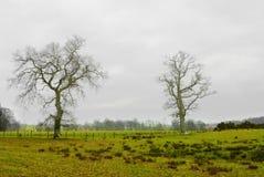 Ein Feld auf einem Ackerland Lizenzfreie Stockfotografie