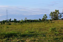 Ein Feld auf einer venezolanischen Ranch mit Bergen im Hintergrund stockfotos
