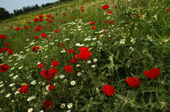 Ein Feld der Frühlingsblumen Stockfotos