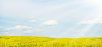 Ein Feld der gelben Blumen auf einem schönen Himmel des Hintergrundes Stockbild