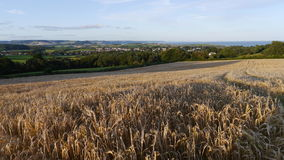 Ein Feld der Gerste reifend in der Sonne in England Stockbild