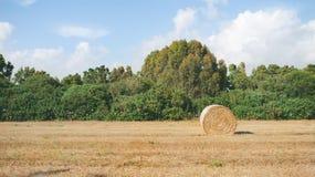 Ein Feld des Grases mit einem Erntung Stockfoto