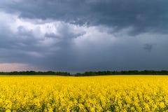 Ein Feld des Rapssamens, unter einem Himmel gefüllt mit stürmischen Wolken lizenzfreie stockbilder
