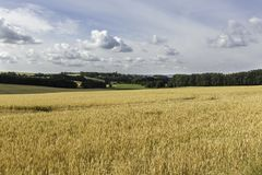 Ein Feld des Weizens an einem bewölkten Tag in Rugen-Insel, Deutschland lizenzfreies stockbild