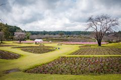 Ein Feld im Garten von Ushiku Daibutsu, Japan lizenzfreie stockbilder