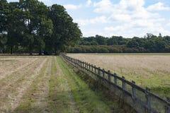 Ein Feld im Suffolk lizenzfreie stockfotografie