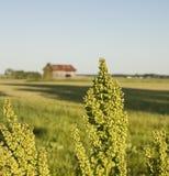 Ein Feld mit einer Scheune Lizenzfreie Stockfotos