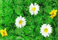 Ein Feld mit Gänseblümchen Stockfotografie