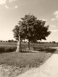 Ein Feld von Mais lizenzfreies stockbild
