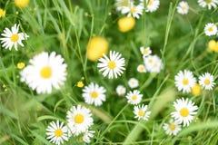 Ein Feld von Sommer Wildflowers Ansicht von oben lizenzfreies stockbild