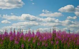 Ein Feld von wilden Blumen im Himmel und in den Wolken stockfotografie
