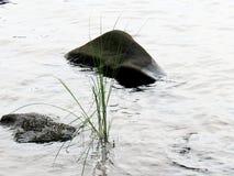 Ein Felsen mitten in dem See mit einem Stiel des Grases lizenzfreies stockfoto