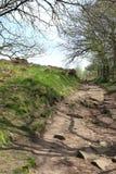 Ein felsiger Fußweg durch die Bäume und die Felder Lizenzfreie Stockfotos