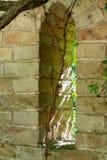 Ein Fenster in einer alten Steinwand wird mit Anlagen bedeckt Stockfotos