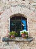 Ein Fenster mit farbigen Veilchen auf dem Fensterbrett stockbild