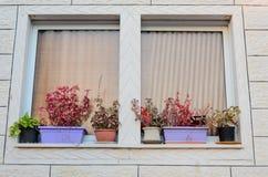 Ein Fenster mit Vorhängen und Blumentöpfen auf dem Fensterbrett außerhalb des neuen Hauses Lizenzfreie Stockfotografie