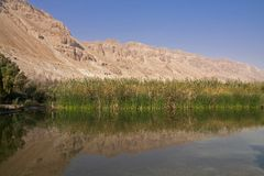 Ein Feshkha. Is the lowest oasis and nature reserve in the world placed near the dead sea - Israel Royalty Free Stock Photos