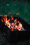 Ein Feuer in der Natur in einem Wald mit einem unscharfen Hintergrund Lizenzfreie Stockbilder