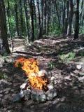 Ein Feuer im Wald stockfotografie