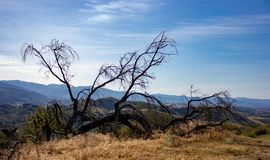 Ein Feuer innerhalb des Weißfisch-Ranch-Wildnis-Parks lizenzfreies stockbild