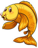 Ein Fisch Lizenzfreies Stockfoto