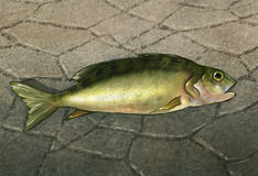 Ein Fisch aus Wasser - Digital-Grafik heraus Stockfotografie