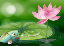 Ein Fisch mit waterlily und eine Blume in dem Teich Stockfoto